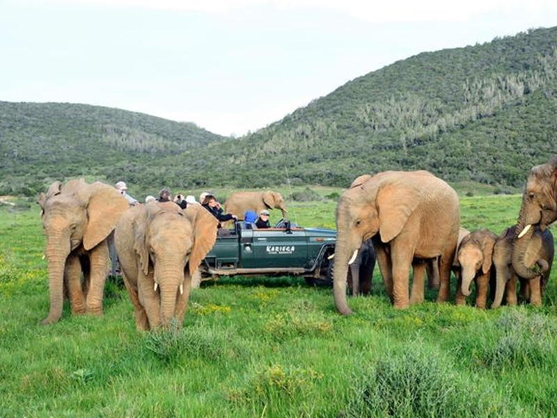 Safari, Elefanten im Kariega National Park