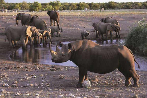 Nashorn Gruppe am Wasserloch in Namibia