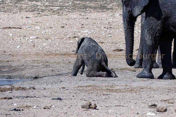 Elefanten Baby im Etosha Nationalpark