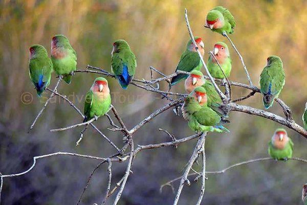 Vögel im Erongo