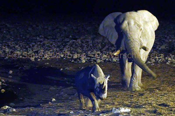 Nashorn und Elefant in Etosha