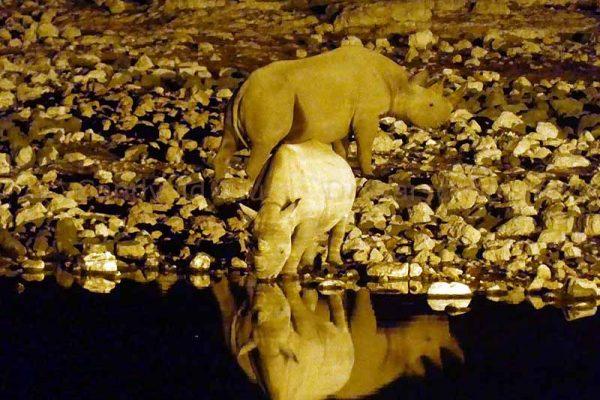 Nachtaufnahme von Nashorn in Etosha