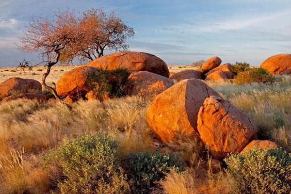 Rote Felsen und Köcherbaum im Khomas Gebiet in Namibia