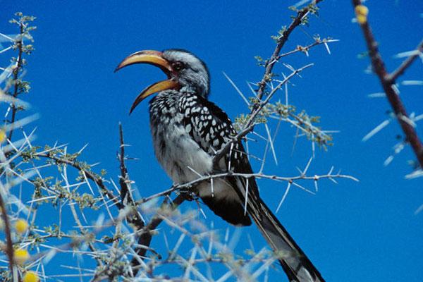 Vogelbeobachtung bei einer Reise durch Namibia