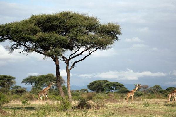 Die Nkorho Landschaft