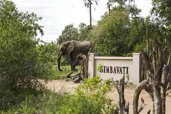 Ein Elefant besucht das Eingangstor der Simbavati River Lodge