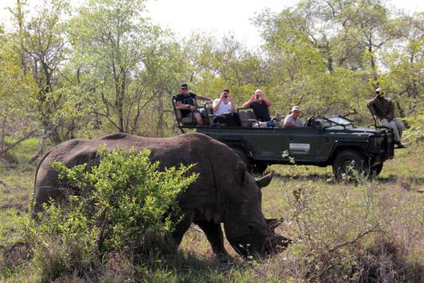Eine Safari Gruppe beobachtet ein Nashorn vom offenen Jeep aus