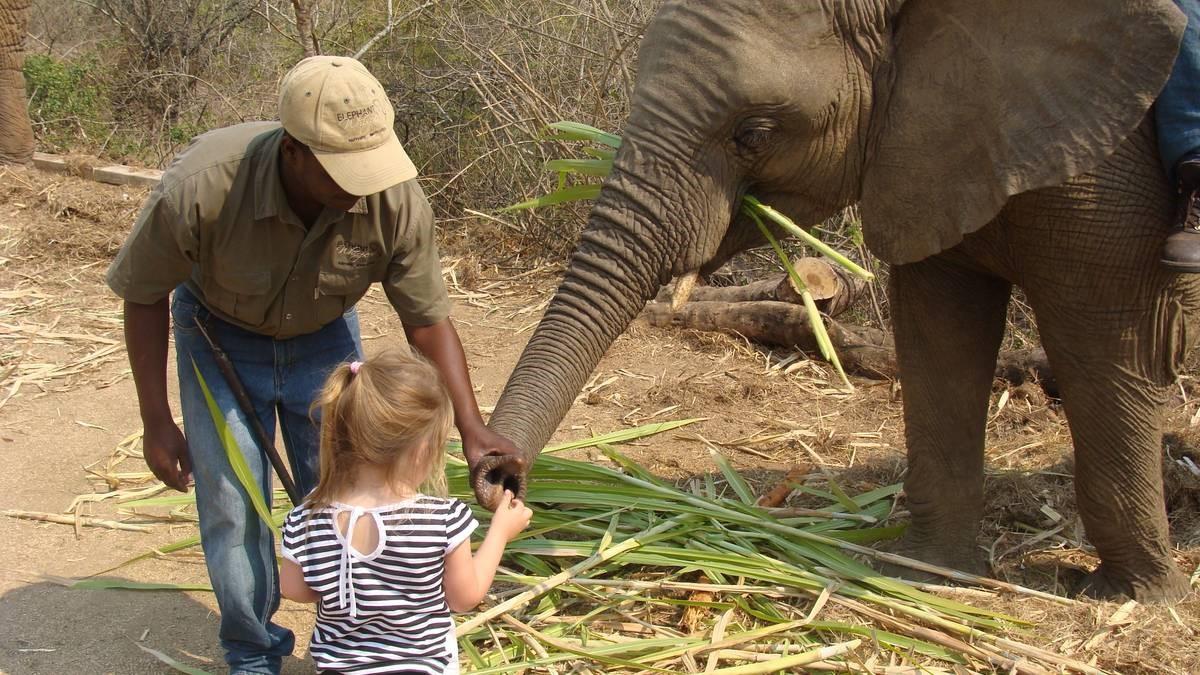 Interaktion mit Elefanten auf der großen Südafrika Rundreise - Elephant Whispers